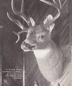 D9057 Canada, E. Angus Rare Find Postcard